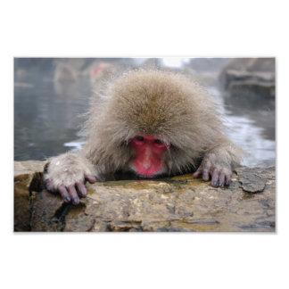 Lonely snow monkey in Nagano, Japan Photo Print