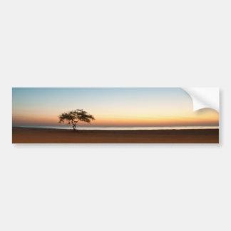 Lonely tree at sunrise in Kuwait Car Bumper Sticker