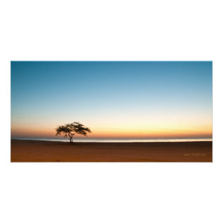 Lonely tree at sunrise in Kuwait Photo Card