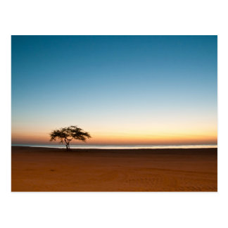 Lonely tree at sunrise in Kuwait Postcard