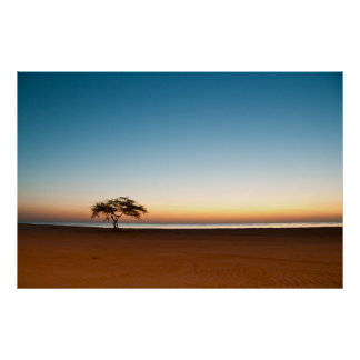 Lonely tree at sunrise in Kuwait Poster