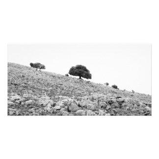 Lonely tree custom photo card