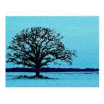 Lonely Tree in a Winter Landscape Postcard