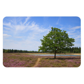 Lonely Tree in Purple Fields of Heather Rectangular Photo Magnet