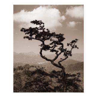 Lonely tree photo print
