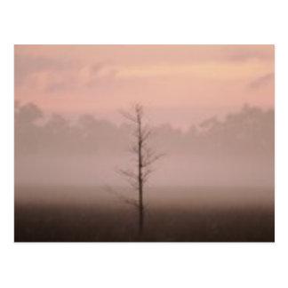Lonely Tree Postcard