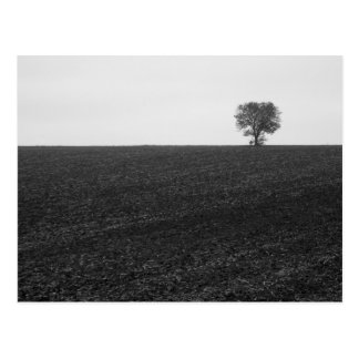 Lonely Tree Post Card