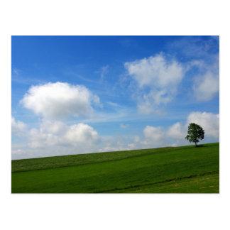 Lonely Tree - Postcard