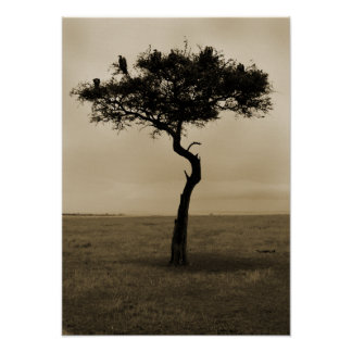 Lonely Tree Poster