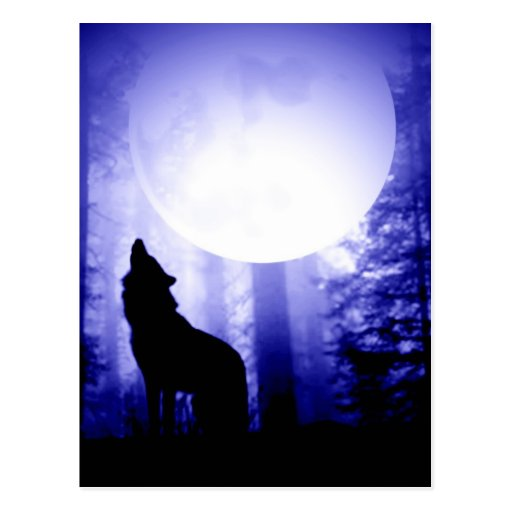 Lonely Wolf Howling at Moon Post Card