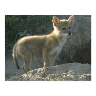 lonelycoyote postcard