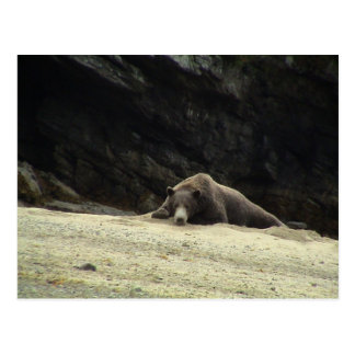 Lonesome Bear Postcard