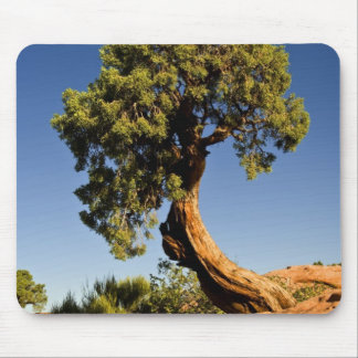 Lonesome Cedar, Deadhorse Point State Park, Mouse Pad