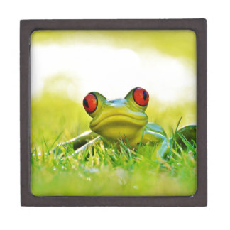 Lonesome Frog In The Grass Gift Boxes
