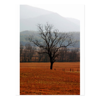 Lonesome Tree Postcard