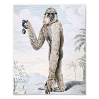 Long Armed Gibbon Ape Art Photo Print