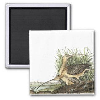 Long-billed Curlew, John Audubon Magnet