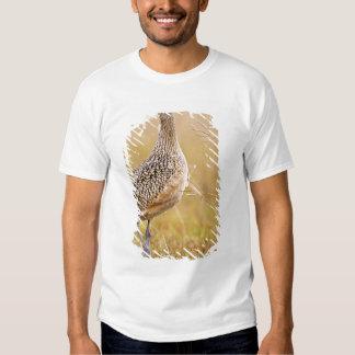 Long-billed Curlew Numenius americanus) adult T-shirt