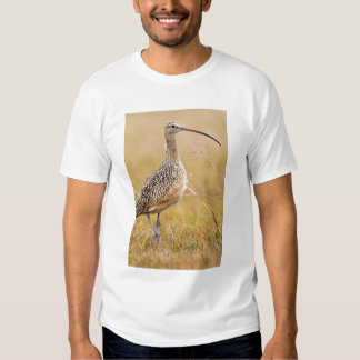 Long-billed Curlew Numenius americanus) adult T Shirt