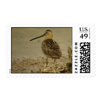Long-billed Dowitcher Stamp