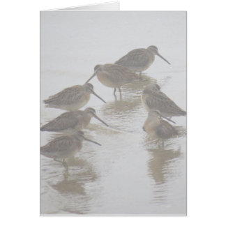 Long-billed Dowitchers folded card