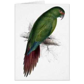 Long -Billed Parrakeet-Maccaw by Edward Lear Card