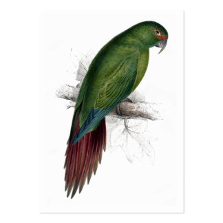 Long -Billed Parrakeet-Maccaw by Edward Lear Large Business Card