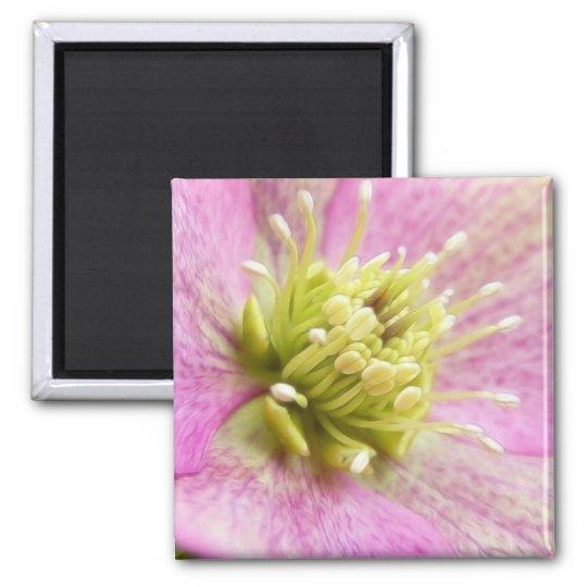 Long Blooming Hellebore Magnet