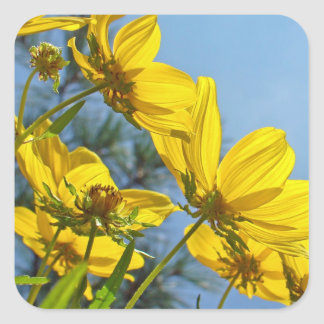 Long-Bracted Tickseed Sunflower Wildflower Square Sticker