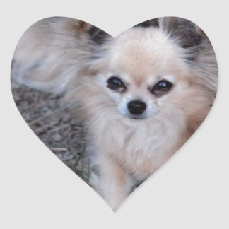 Long Coat Chihuahua Heart Sticker