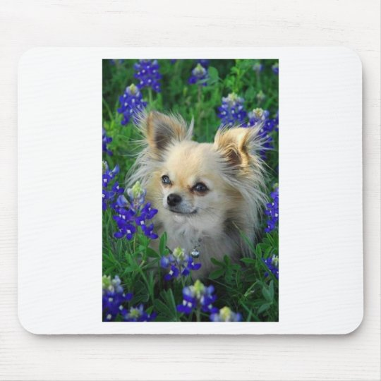 Long Coat Chihuahua in Blue Bonnets Mouse Pad