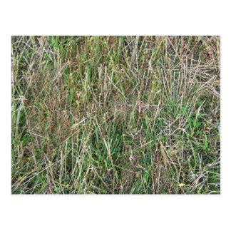 Long cut grass texture postcard