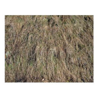 Long dead grass texture postcard