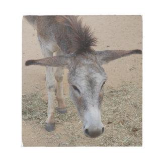 Long Eared Donkey Memo Note Pads
