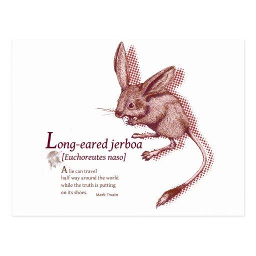 Long eared Jerboa - jam Postcard