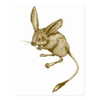 Long eared Jerboa Postcard