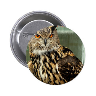 Long Eared Owl Button
