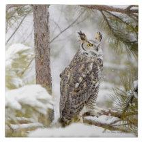 Long eared owl ceramic tile