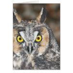 Long-eared Owl Greeting Card