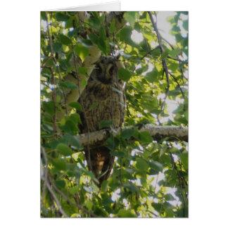 Long eared owl in tree - asio otus greeting card