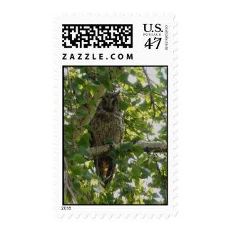 Long eared owl in tree - asio otus postage stamp