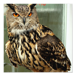 Long Eared Owl Invitations