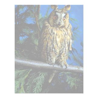 Long-eared owl letterhead