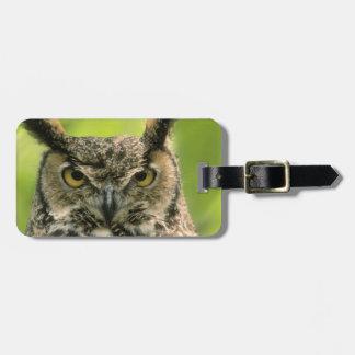 Long Eared Owl Luggage Tag