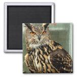 Long Eared Owl Magnet Magnets