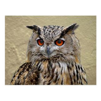 Long-eared owl postcard