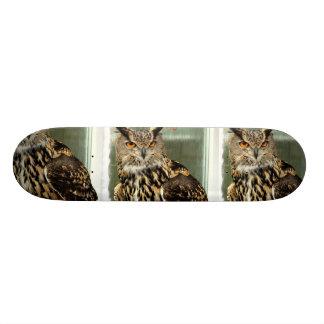 Long Eared Owl Skateboard