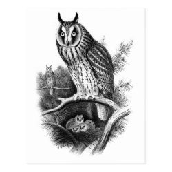 Postcard with Long-eared Owl Sketch design