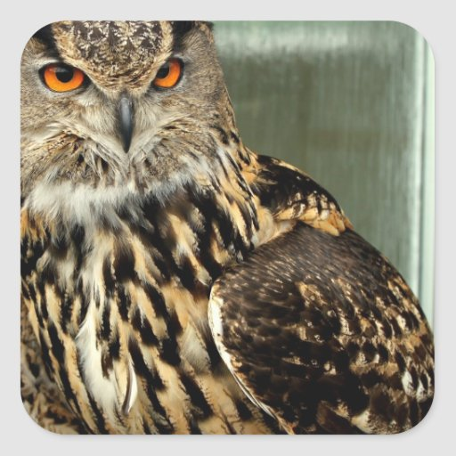 Long Eared Owl Stickers