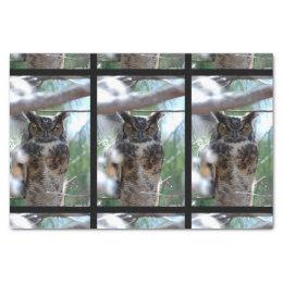 Long-Eared Owl Tissue Paper